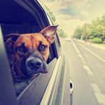 A Guide To Vacation With Your Dog
