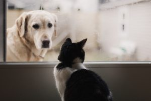 Senior Pet Care Awareness